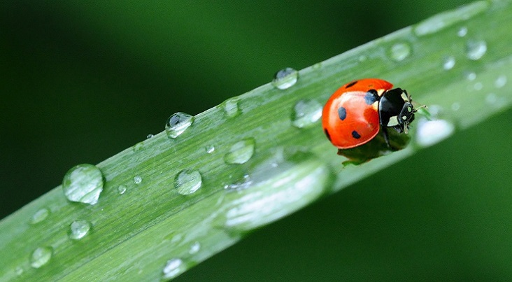 Why the Ladybird?